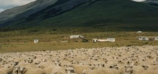 sheep_torres_del_paine-320x320