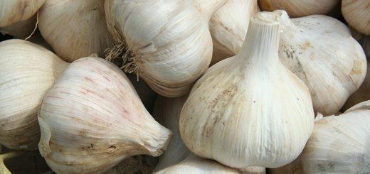 GarlicBasket